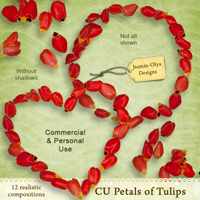 CU Petals of Tulips